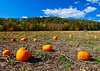 101810 Pennsylvania Pumpkin Field